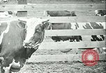 Image of foot and mouth disease California United States USA, 1925, second 35 stock footage video 65675022115