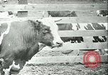 Image of foot and mouth disease California United States USA, 1925, second 36 stock footage video 65675022115