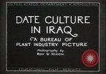 Image of Date Culture in Iraq Mesopotamia Iraq, 1929, second 9 stock footage video 65675022173