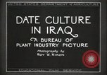 Image of Date Culture in Iraq Mesopotamia Iraq, 1929, second 10 stock footage video 65675022173
