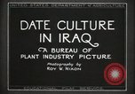 Image of Date Culture in Iraq Mesopotamia Iraq, 1929, second 11 stock footage video 65675022173