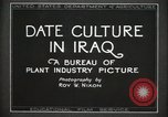 Image of Date Culture in Iraq Mesopotamia Iraq, 1929, second 13 stock footage video 65675022173