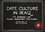 Image of Date Culture in Iraq Mesopotamia Iraq, 1929, second 14 stock footage video 65675022173