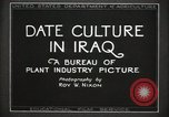 Image of Date Culture in Iraq Mesopotamia Iraq, 1929, second 19 stock footage video 65675022173
