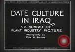 Image of Date Culture in Iraq Mesopotamia Iraq, 1929, second 21 stock footage video 65675022173