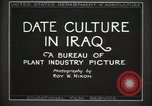 Image of Date Culture in Iraq Mesopotamia Iraq, 1929, second 22 stock footage video 65675022173