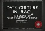 Image of Date Culture in Iraq Mesopotamia Iraq, 1929, second 24 stock footage video 65675022173