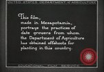 Image of Date Culture in Iraq Mesopotamia Iraq, 1929, second 27 stock footage video 65675022173
