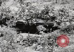Image of Rifle squad in Defense Part II United States USA, 1965, second 14 stock footage video 65675022238