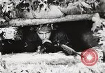 Image of Rifle squad in Defense Part II United States USA, 1965, second 31 stock footage video 65675022238