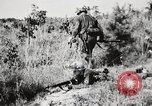 Image of Rifle Squad members United States USA, 1965, second 48 stock footage video 65675022239