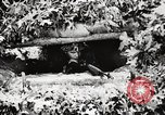 Image of Rifle Squad members United States USA, 1965, second 52 stock footage video 65675022240