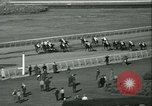 Image of Horse named Pompoon New York United States USA, 1936, second 53 stock footage video 65675022412