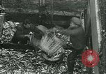 Image of Herring and Bloater fishes United Kingdom, 1934, second 14 stock footage video 65675022441