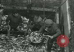 Image of Herring and Bloater fishes United Kingdom, 1934, second 15 stock footage video 65675022441