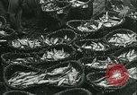 Image of Herring and Bloater fishes United Kingdom, 1934, second 19 stock footage video 65675022441
