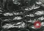 Image of Herring and Bloater fishes United Kingdom, 1934, second 21 stock footage video 65675022441