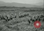 Image of Sugarcane Field Taiwan, 1958, second 17 stock footage video 65675022486