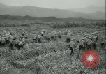 Image of Sugarcane Field Taiwan, 1958, second 18 stock footage video 65675022486