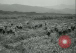 Image of Sugarcane Field Taiwan, 1958, second 19 stock footage video 65675022486
