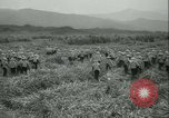 Image of Sugarcane Field Taiwan, 1958, second 20 stock footage video 65675022486