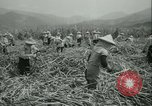 Image of Sugarcane Field Taiwan, 1958, second 24 stock footage video 65675022486