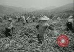 Image of Sugarcane Field Taiwan, 1958, second 25 stock footage video 65675022486