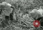 Image of Sugarcane Field Taiwan, 1958, second 29 stock footage video 65675022486