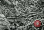 Image of Sugarcane Field Taiwan, 1958, second 32 stock footage video 65675022486