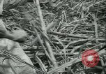 Image of Sugarcane Field Taiwan, 1958, second 33 stock footage video 65675022486