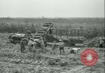 Image of Sugarcane Field Taiwan, 1958, second 36 stock footage video 65675022486