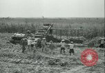 Image of Sugarcane Field Taiwan, 1958, second 37 stock footage video 65675022486