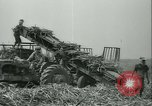 Image of Sugarcane Field Taiwan, 1958, second 40 stock footage video 65675022486