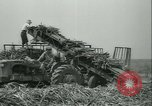 Image of Sugarcane Field Taiwan, 1958, second 41 stock footage video 65675022486
