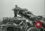 Image of Sugarcane Field Taiwan, 1958, second 42 stock footage video 65675022486