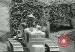 Image of Sugarcane Field Taiwan, 1958, second 44 stock footage video 65675022486