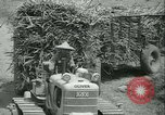 Image of Sugarcane Field Taiwan, 1958, second 45 stock footage video 65675022486