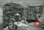 Image of Sugarcane Field Taiwan, 1958, second 46 stock footage video 65675022486