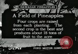 Image of Pineapple harvested Hawaii USA, 1916, second 1 stock footage video 65675022622