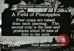 Image of Pineapple harvested Hawaii USA, 1916, second 6 stock footage video 65675022622