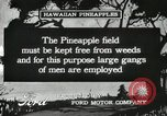 Image of Pineapple harvested Hawaii USA, 1916, second 36 stock footage video 65675022622