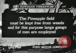 Image of Pineapple harvested Hawaii USA, 1916, second 39 stock footage video 65675022622