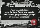 Image of Pineapple harvested Hawaii USA, 1916, second 40 stock footage video 65675022622