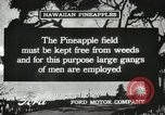 Image of Pineapple harvested Hawaii USA, 1916, second 41 stock footage video 65675022622