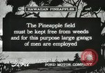 Image of Pineapple harvested Hawaii USA, 1916, second 42 stock footage video 65675022622