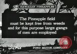 Image of Pineapple harvested Hawaii USA, 1916, second 43 stock footage video 65675022622