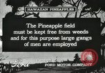 Image of Pineapple harvested Hawaii USA, 1916, second 44 stock footage video 65675022622