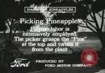Image of Pineapple harvested Hawaii USA, 1916, second 57 stock footage video 65675022622