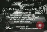 Image of Pineapple harvested Hawaii USA, 1916, second 59 stock footage video 65675022622