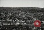 Image of Sugarcane fields Hawaii USA, 1916, second 19 stock footage video 65675022626
